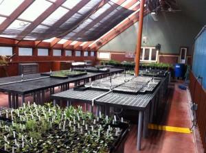 PlantPropagation_post3