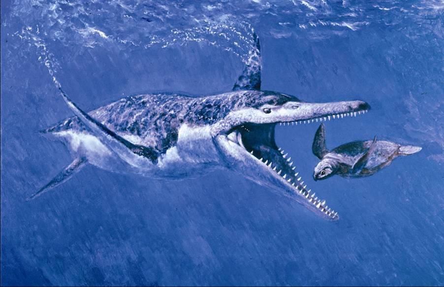 Pleisiosaur and turtle