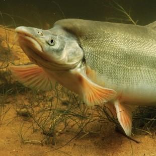 SSSfish