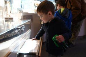 Kid looking at display case